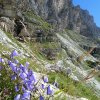 Some coloured spots! The Alpine vegetation is amazing! Foto: AT, © Peer