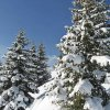 Fresh snow on the trees of Alta Badia skiing area near La Villa. Foto: BS, © Peer