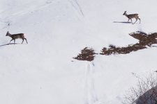 RS rehe winter