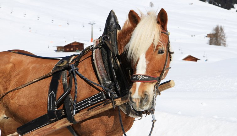 Horse-drawn sleigh races and skijoring, Foto: EMS, © Peer